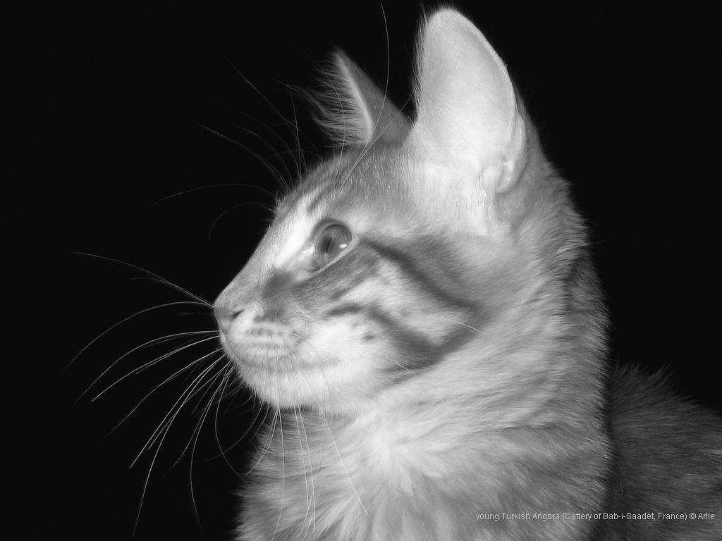 Cat 11