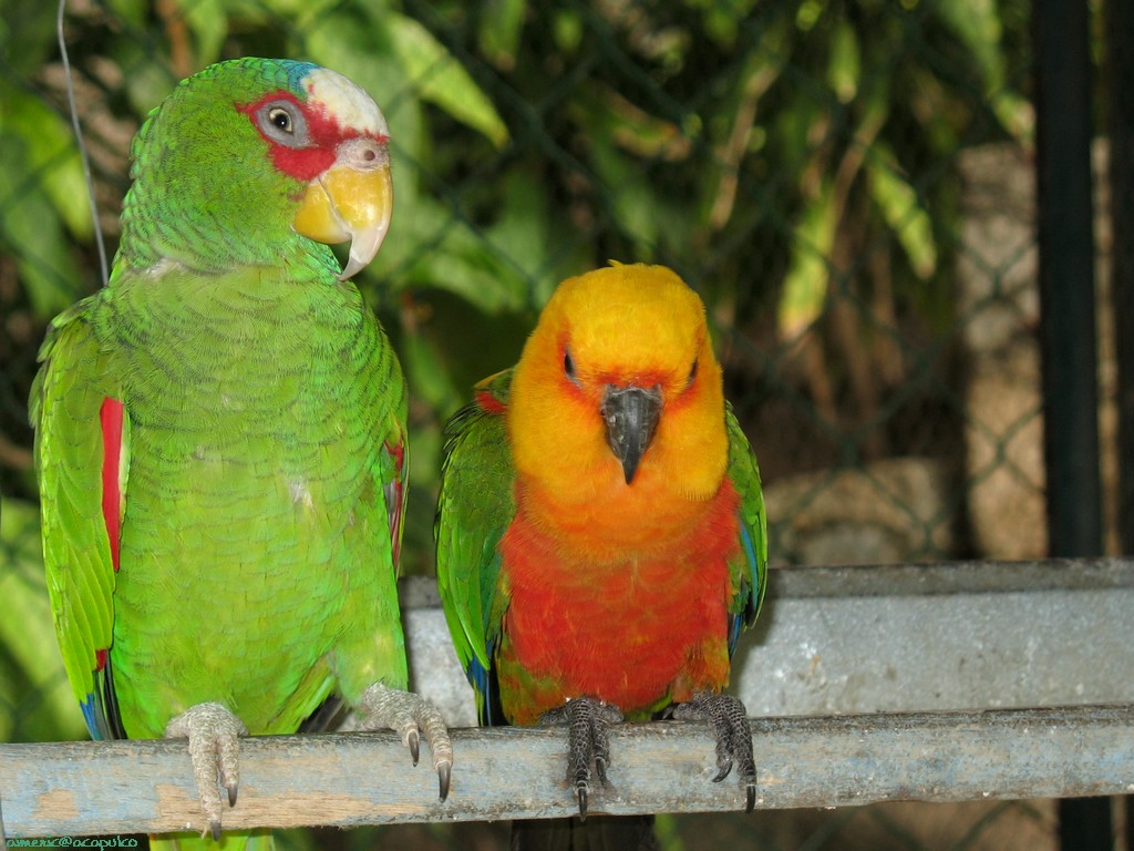 You are viewing the animals parrot wallpaper named Parrot 4.