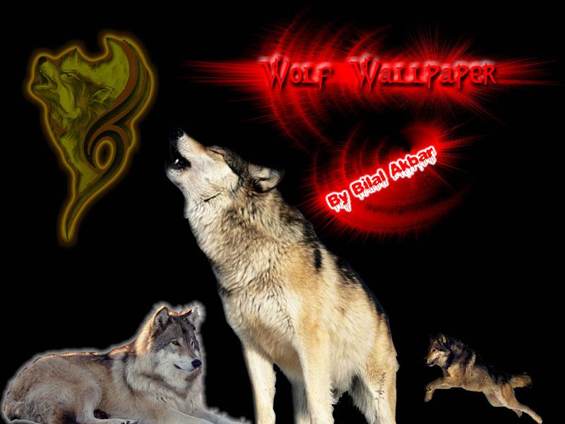 Wolf 11