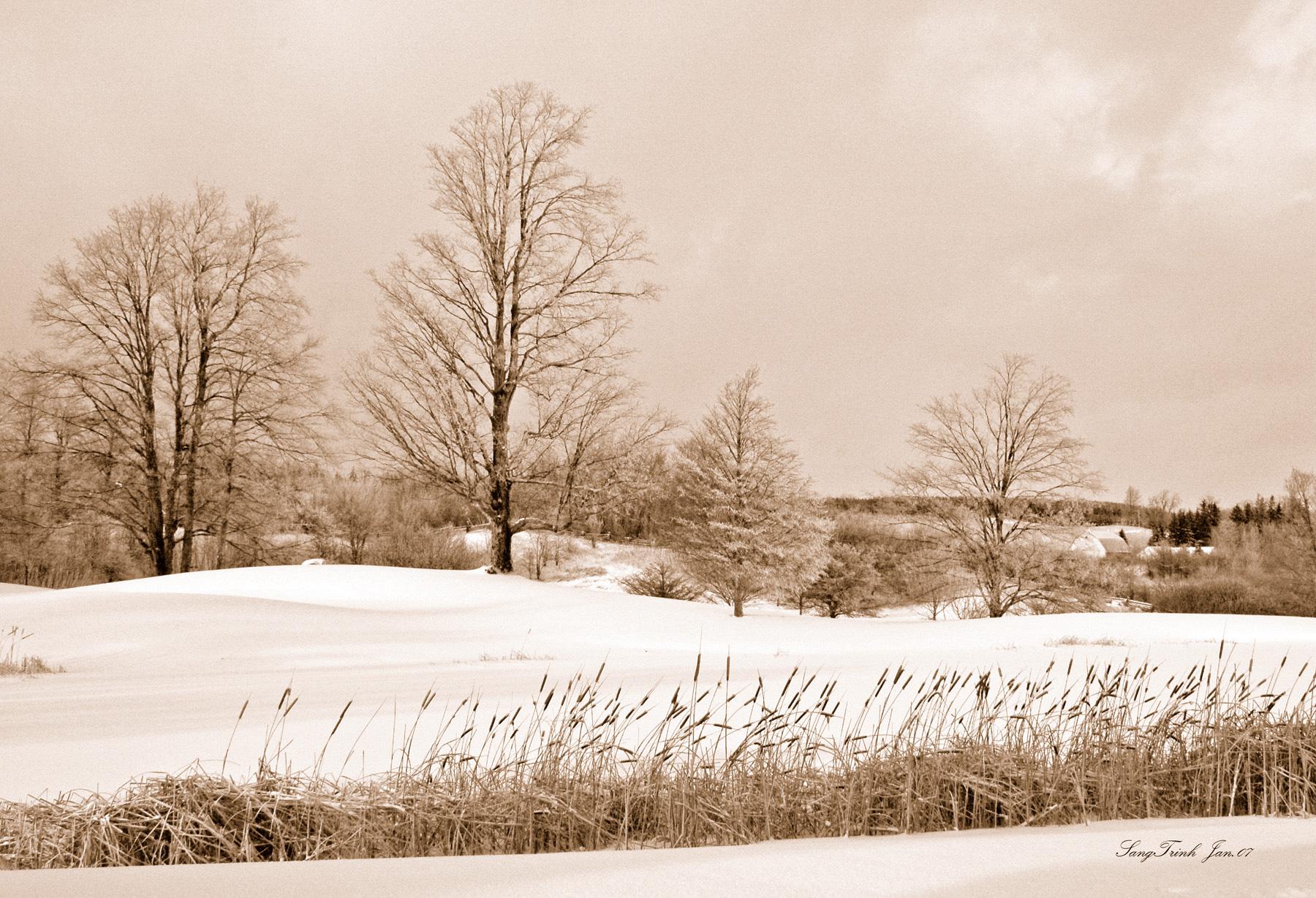 Winter scene 36
