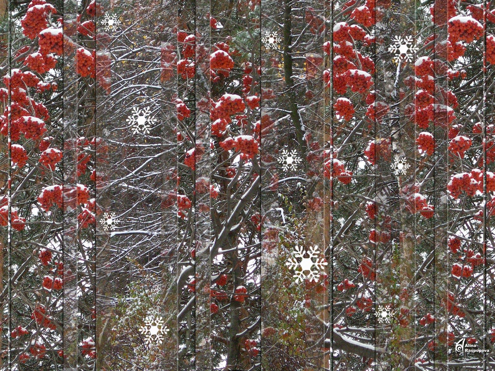 Winter scene 37