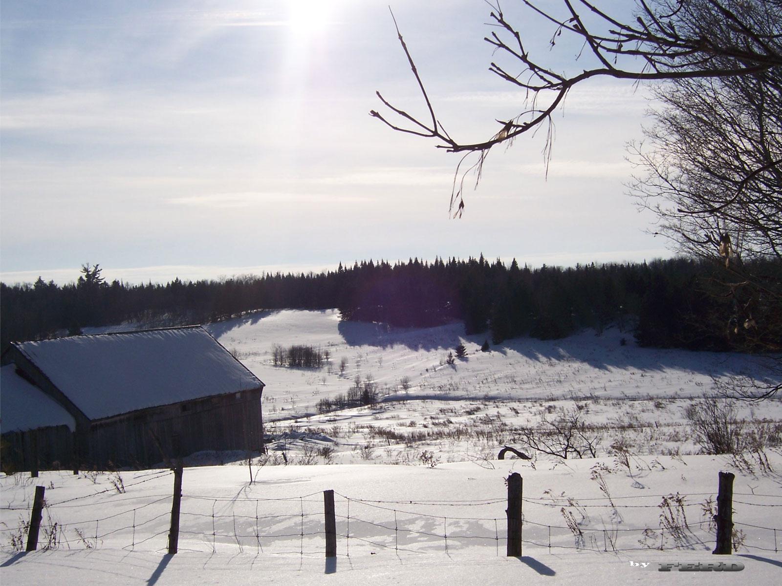 Winter scene 39