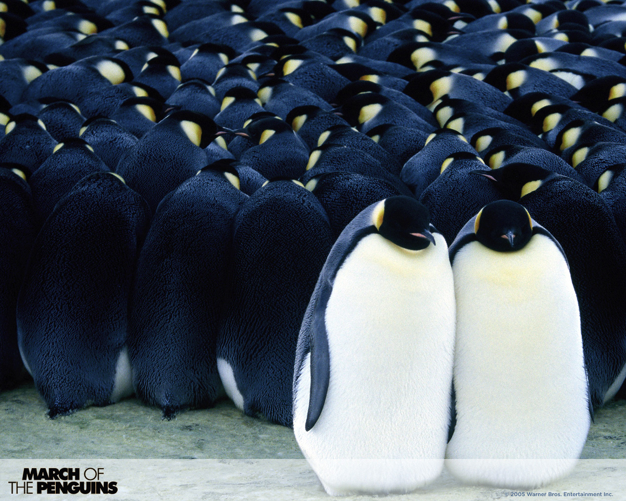 March of the penguins 3