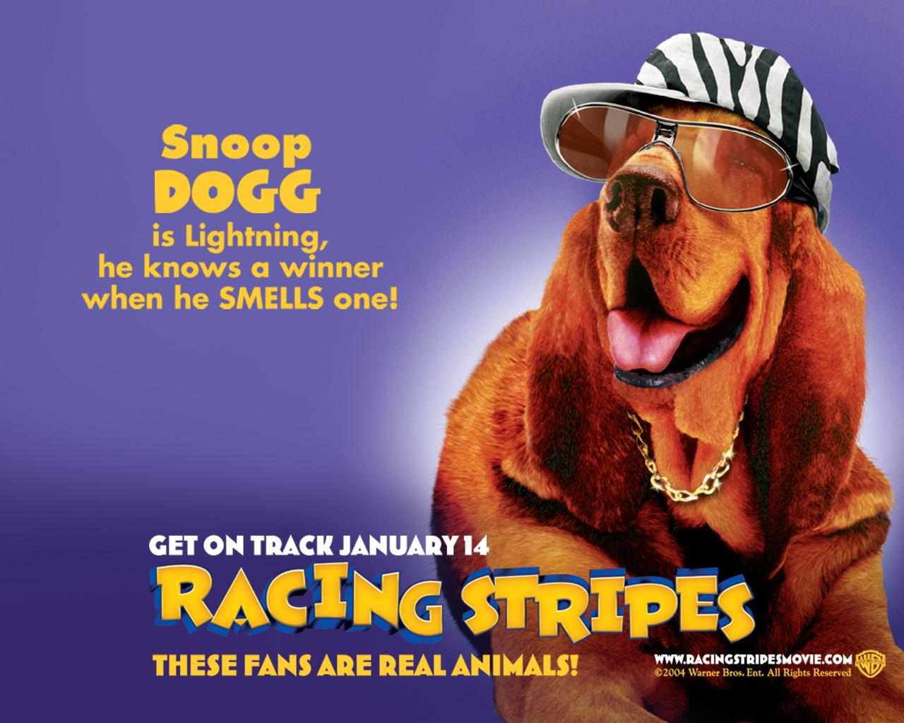 Racing stripes 7